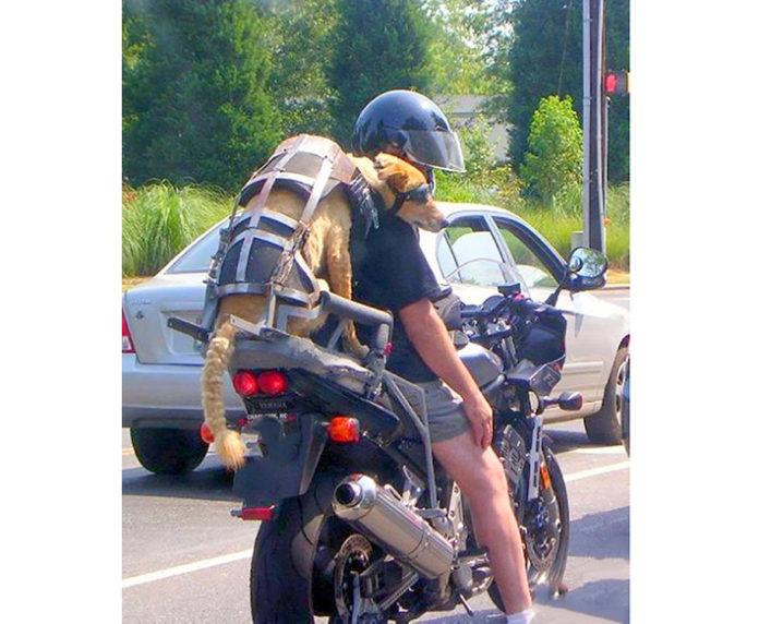 Il miglior amico per andare in moto