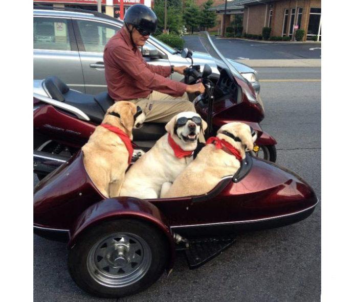 Un tris di cani in sidecar, miglior amico per un viaggio