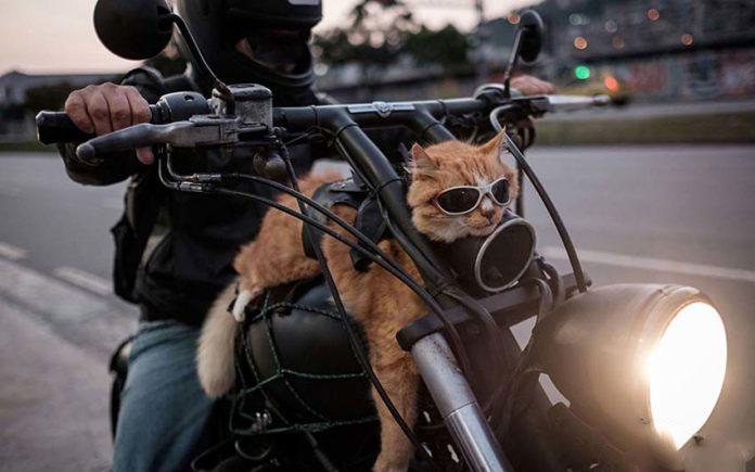 Andare in moto con il nostro felino, si può.