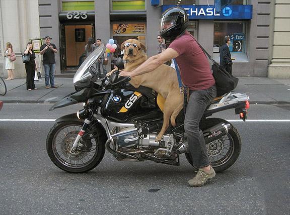 Un cane in sella alla moto con il padrone