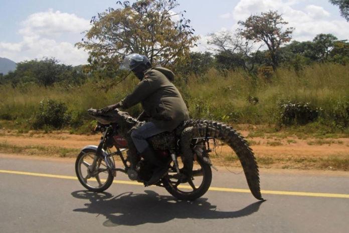 Moto Jurassica