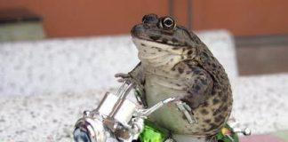 Una rana in moto