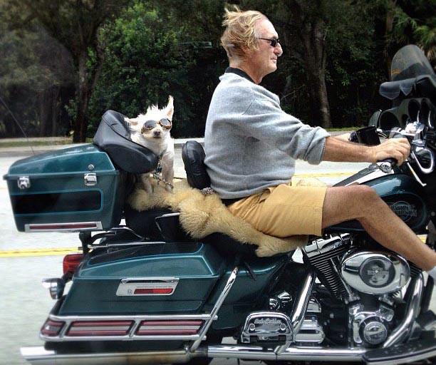 Un cagnolino seduto sulla moto con il padrone