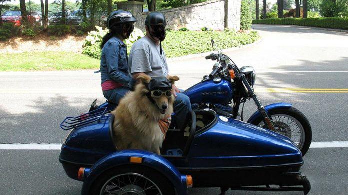 Partire in moto con la moto? Si ma il cane viene con noi