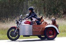 Io con i cani vado ovunque, anche in moto.
