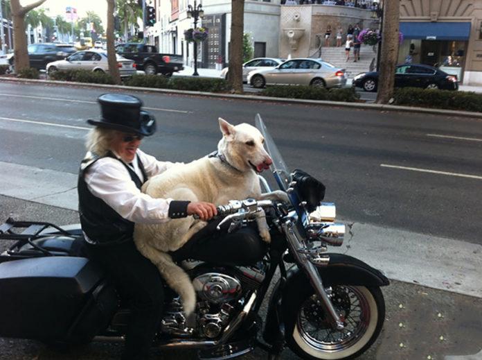 Giro in moto con il cane